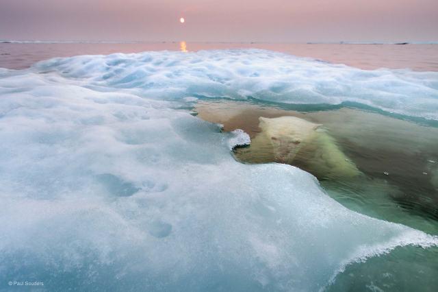 Water Bear, Paul Souders