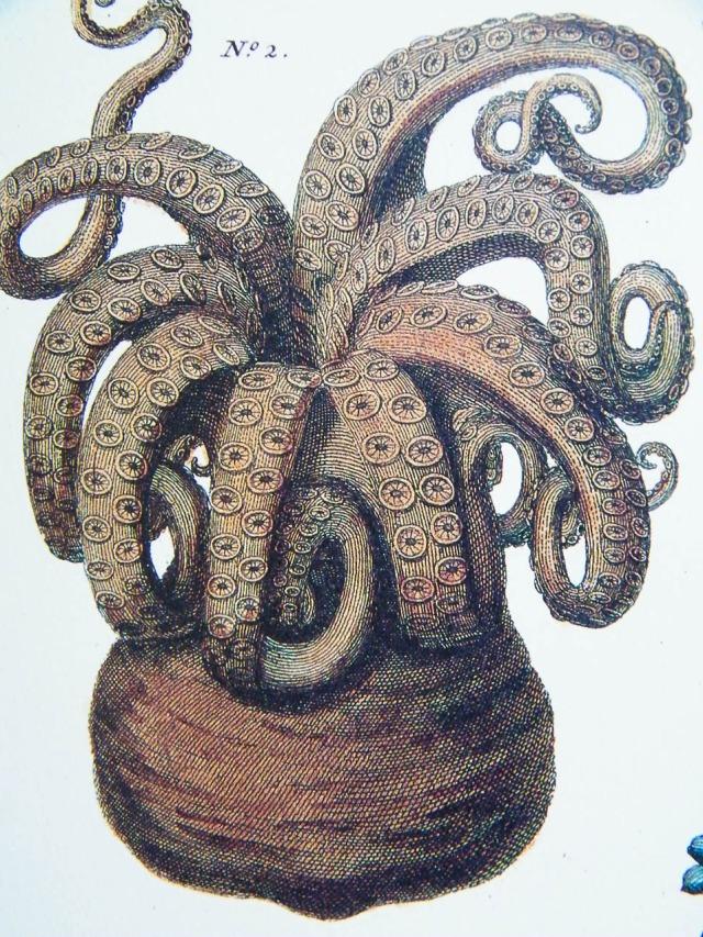 octopus #2