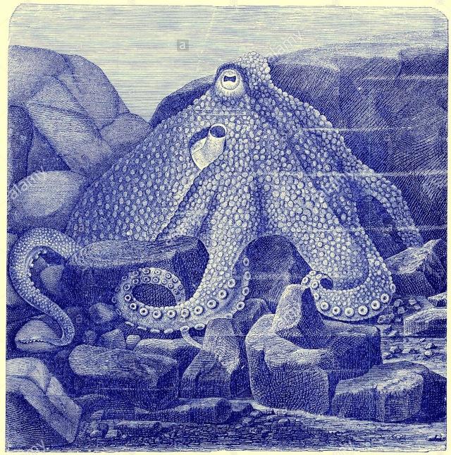 common-octopus-the-royal-natural-history-ed-richard-lydekker-frederick-BD8K5T.jpg