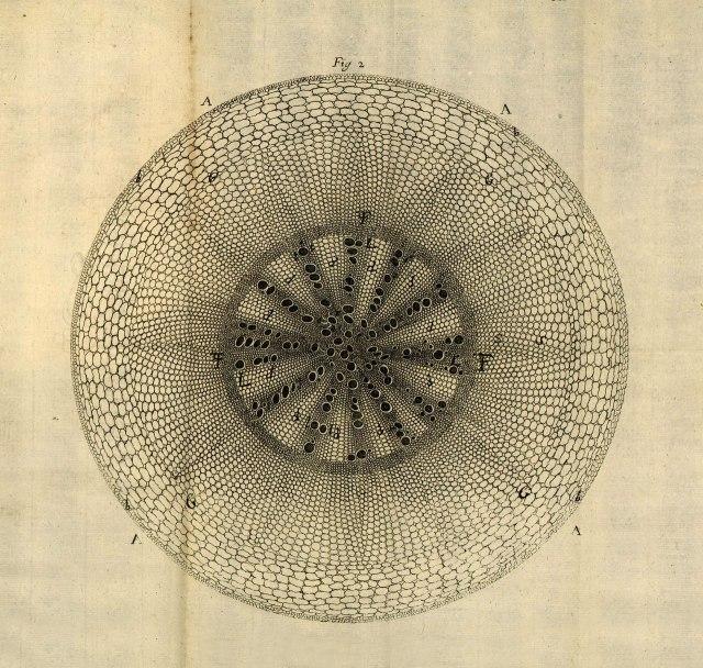 Engraving from Stephen Hales' Anatomy of Plants, 1682. .jpg